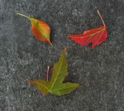 Leaves_small